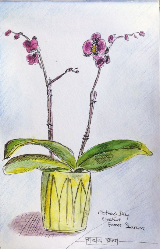 Orchid-Plant